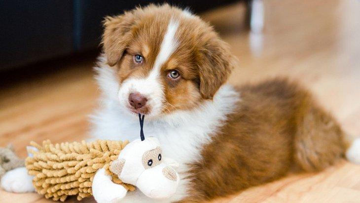 コロナ自宅待機中の子犬の社会化について、英国動物虐待防止協会がアドバイス