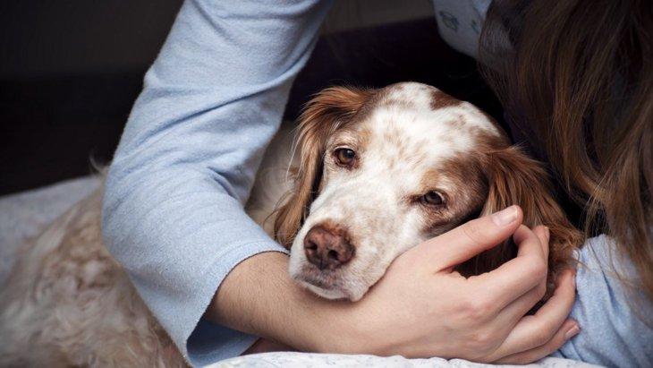 愛犬の介護が飼い主の生活にもたらす影響についてのリサーチ