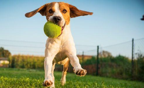 運動不足はストレスの元!愛犬と楽しく運動できる5つの遊び方