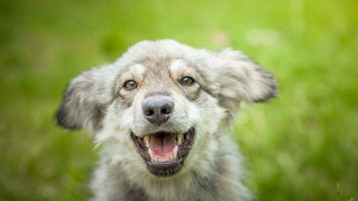 犬が心から楽しんでいるときにする行動や仕草8つ