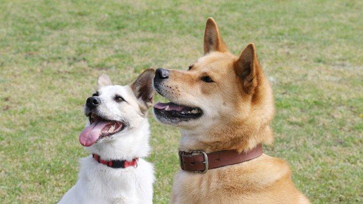 犬の里親になれない人の特徴5選!里親になるにはどのような条件が必要なの?