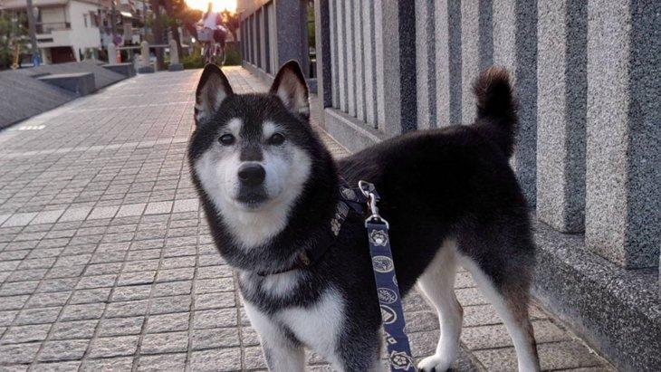『犬だって歳をとるんです』飼い主さんの訴えツイートが話題に