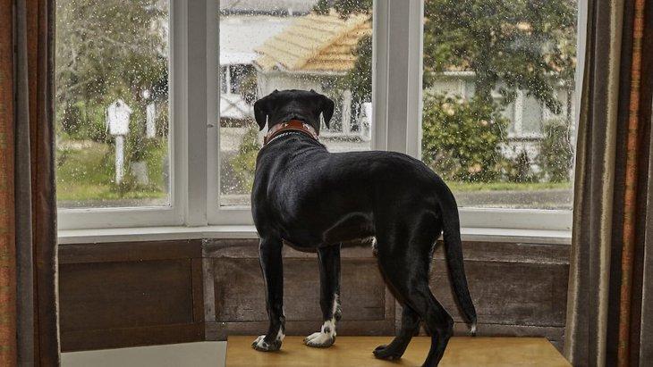 犬の分離不安と飼い主の幸福度の複雑な関係【リサーチ結果】