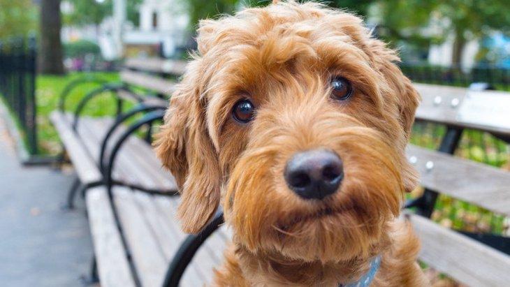 犬にしてはいけない『優しすぎるNG行為』5選