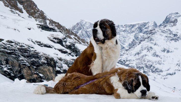 『短命な犬種』3選!長生きしない犬の共通点とは?