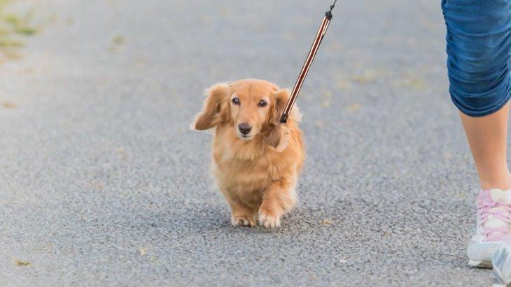 犬のしつけが下手な人の共通点4つ