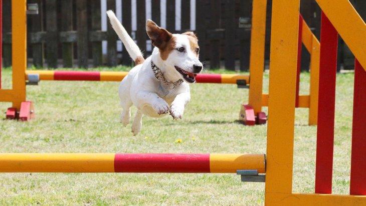 犬が持っている『驚きの能力』5選!人との違いやその役割について解説