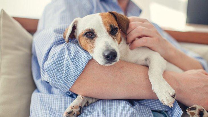 犬が飼い主を嫌いになった時に見せる仕草5選