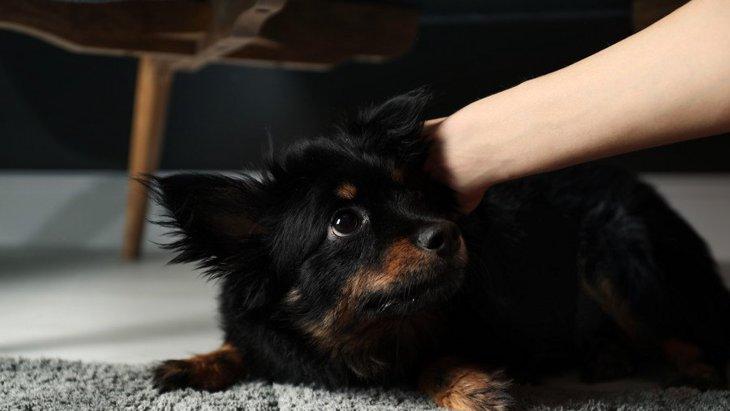 犬との良好な関係が崩れてしまうNG行為3選
