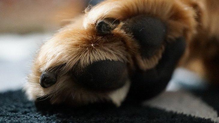 犬も「爪とぎ」をすることがある?