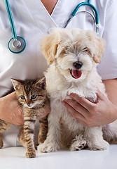 動物看護師について考えてみよう。どんな仕事?資格は必要?
