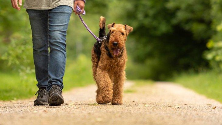 犬の『散歩時間』どのくらいがベスト?犬種別の目安や注意すべきポイントを解説