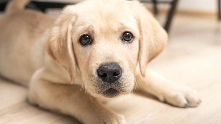 犬にしてはいけない『飼い主の態度』5選!知らず知らずのうちに愛犬が悲しい想いをしているかも…?