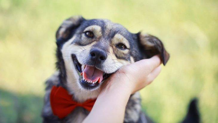 『犬好き』に共通する4つのこと