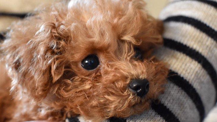 小型犬を飼っている家で絶対にしなければいけないこと5選