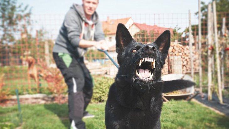 犬を攻撃的な性格にしてしまう飼い主のNG行為5選