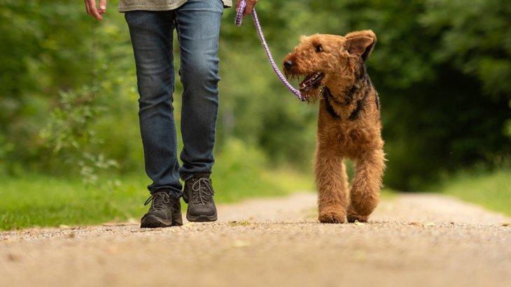 犬の散歩から帰った時にしてはいけないNG行為4選