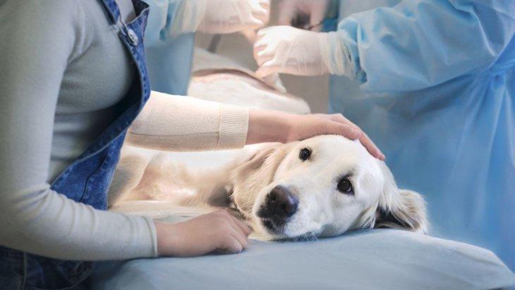 犬のがん治療について(1) 3つの標準治療