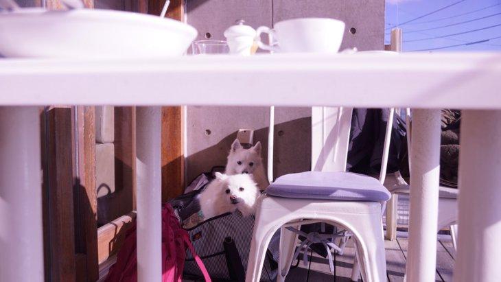 愛犬と世界一の朝食を楽しむ「鎌倉bills七里ヶ浜」のパンケーキ