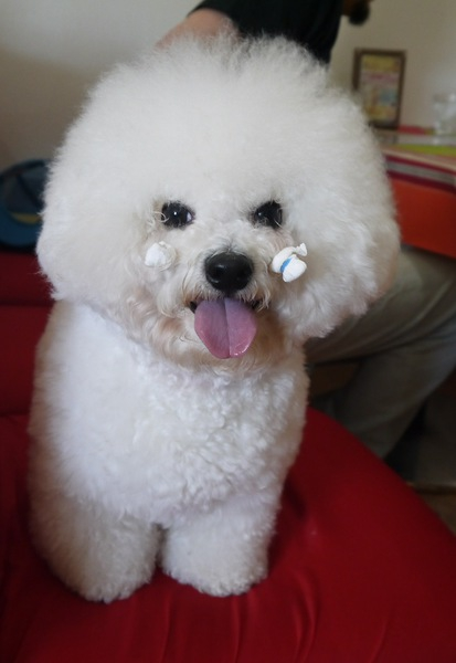 ハンドシャイはこころの病気…犬の気持ちを知ろう!