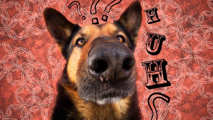 最新の脳研究により「犬は人の言葉を理解している」と判明!