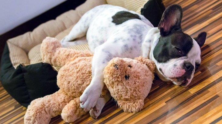 犬が白目で眠ってるけど…大丈夫?病気になっている可能性は?