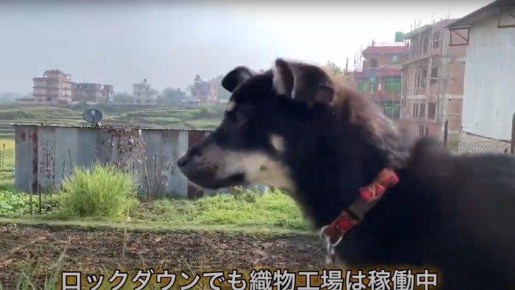 【ネパール】日本では見ることができない景色!野良犬たちとお散歩