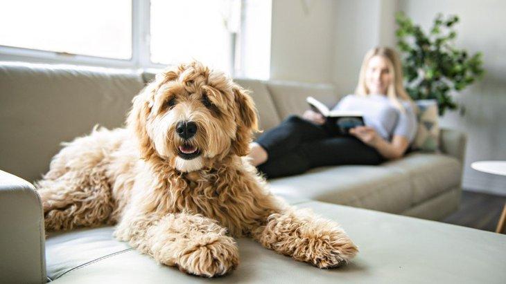 犬がゆっくりとしっぽを振っている時の心理4選!落ち着いている?それとも警戒しているの?