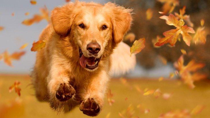 犬が飛びかかって来た時にやってはいけないこと3つ