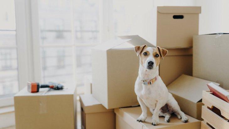 犬を新しい環境に慣らす為にまずするべきこと4つ