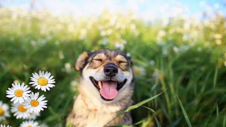 犬が見せる『楽しすぎる♡サイン』7選