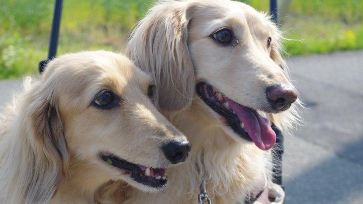2匹目の犬を飼ってはいけない人の特徴4つ