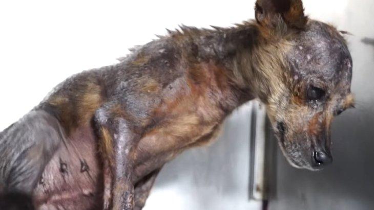 脱水症状により瀕死の状態だった犬、救助されオアシスに辿り着く