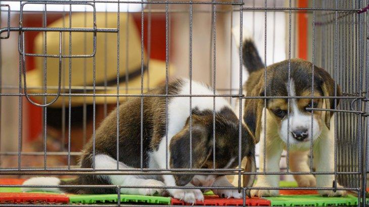動物愛護法の『数値規制』とは。何が変わるの?私たちにできることは?
