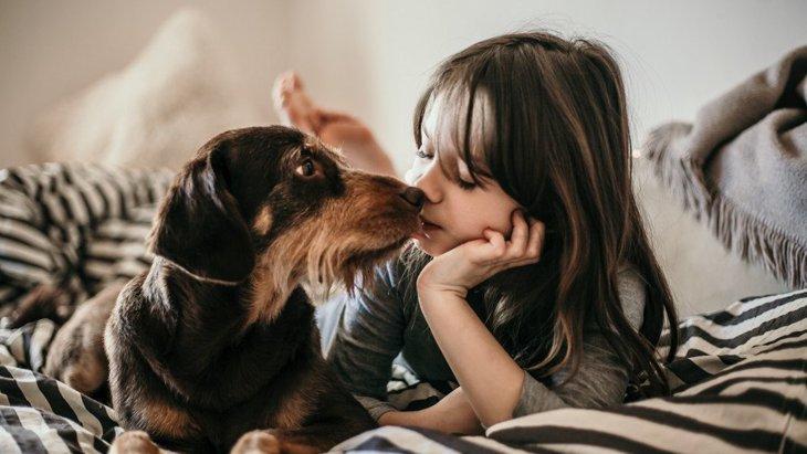 犬が飼い主を慰めている時によくする行動5選