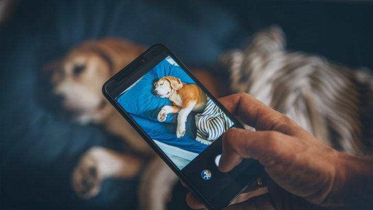 犬をスマホで撮る時に絶対してはいけないNG行為4選