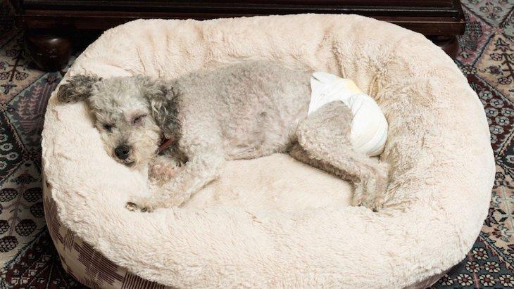 犬のマナーパッド!人気の高いおすすめ商品4選