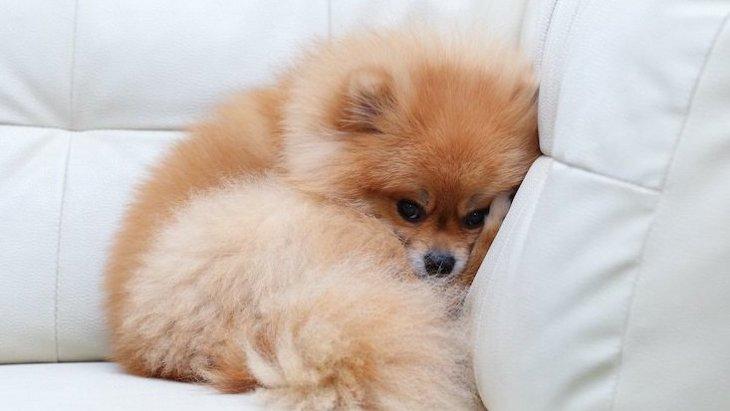 犬にとって悪影響のある『住環境』の特徴4選