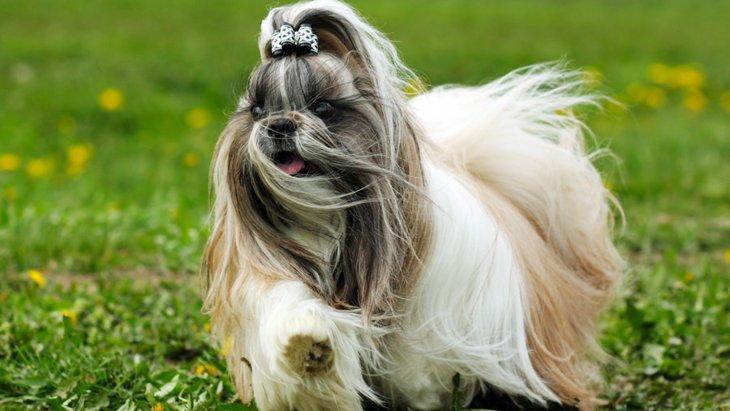 強風の日に犬の散歩に行く時の注意点2つ