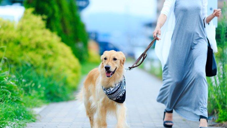 愛犬との散歩で飼い主ができるコミュニケーション4つ