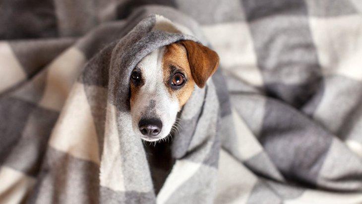 必ずチェックして!犬の危険な『嘔吐・下痢』の特徴5つ