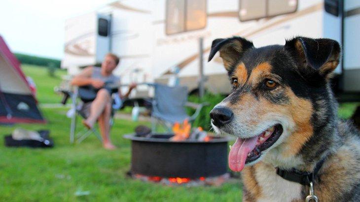 犬とキャンプする時に必要な物や注意点とは?