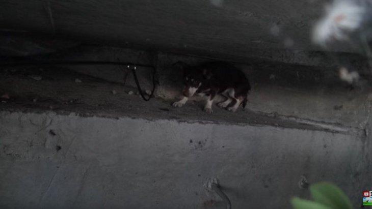 すばしこい小型犬を保護!並大抵じゃない捕り物の一部始終