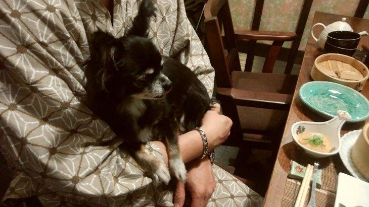 愛犬と行く客室露天風呂付き宿の旅。「はんなり伊豆高原」③ お食事編