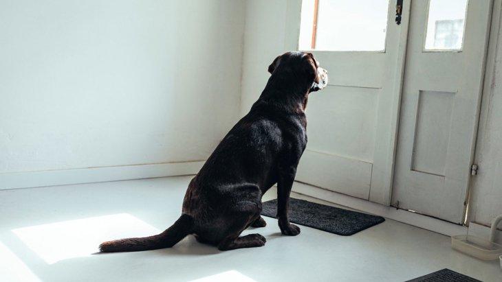 どんな気持ちなの?犬が『お留守番』している時の心理5選