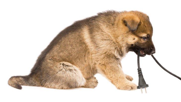 室内犬は要注意!コンセントのトラブルに気を付けて!