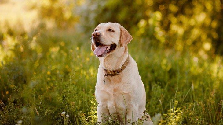 成犬をしつけし直すのは可能?どうやってやるのが正しいの?
