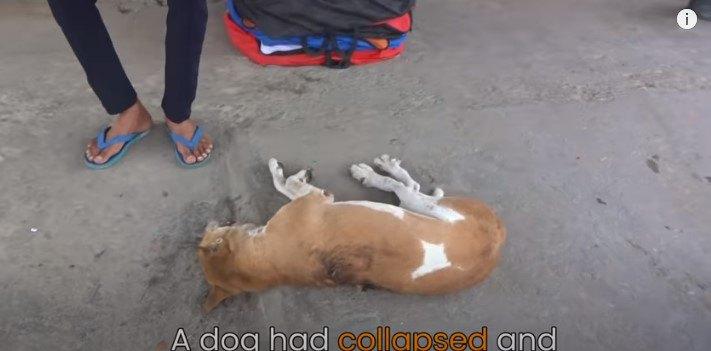 激しい痛みで道端に倒れ、声をあげて助けを呼んだ犬