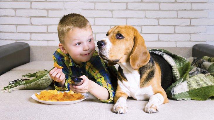 犬がポテトチップスを食べた!誤飲時にやりたい対策と考えられる健康被害