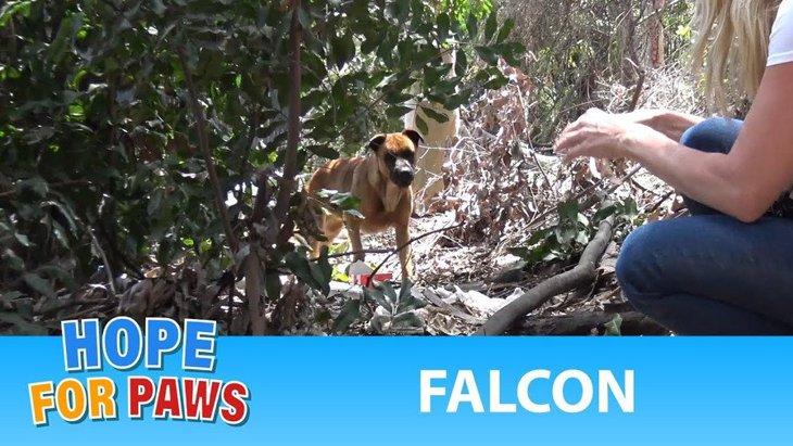 ゴルフ場に居ついた犬を保護。里親さんに巡り合ってリア充生活を満喫!